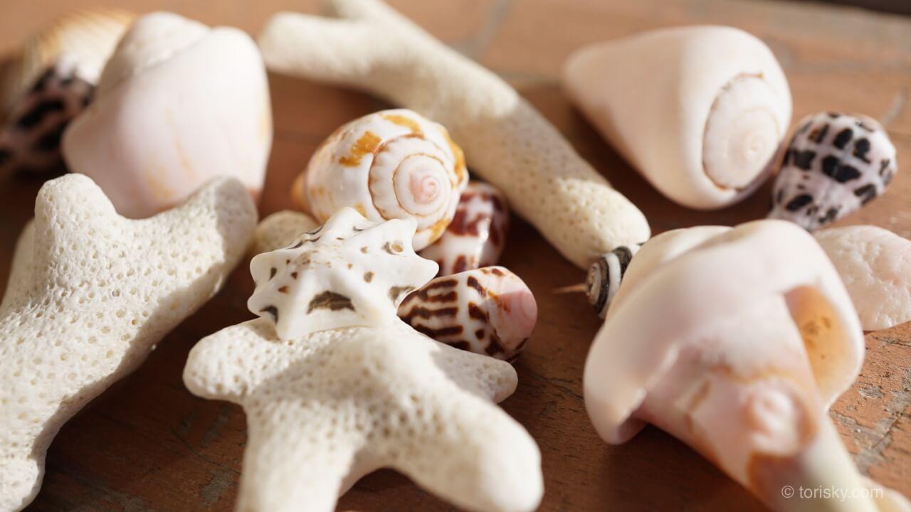 俳句:パスワード貝殻