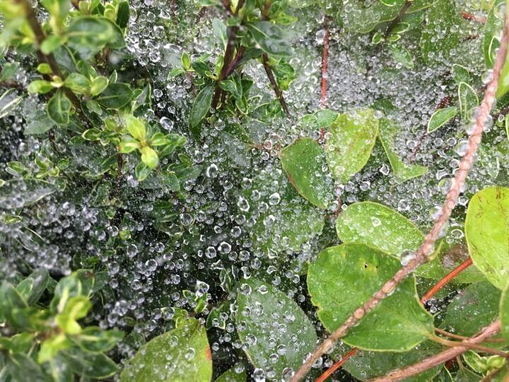 俳句:雨上がり