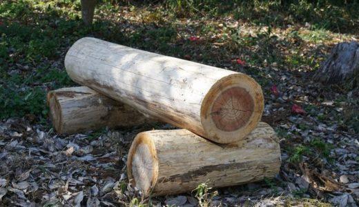 倒れた木で簡易的な丸太椅子を作る