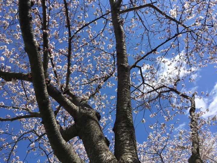 俳句:春の夢